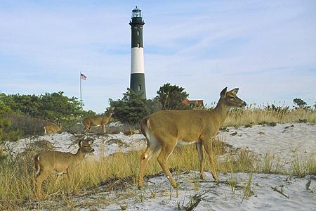 fireislandlight_deers