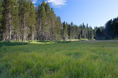 mcgurk_meadow6