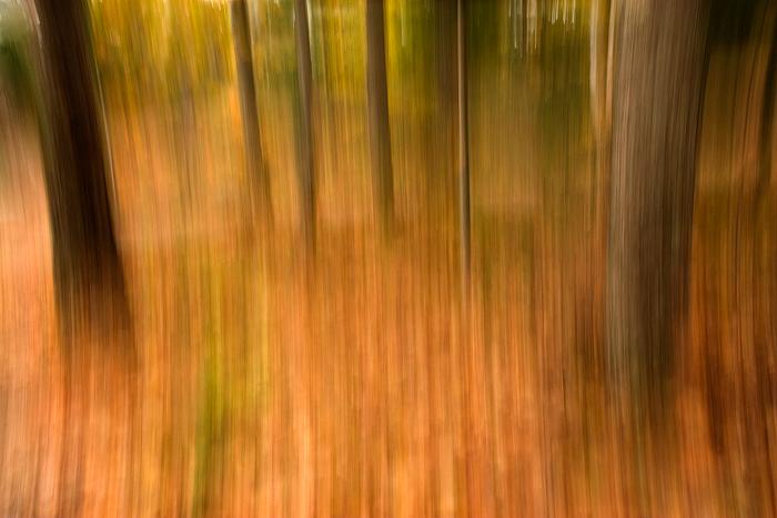 bgr_forest1