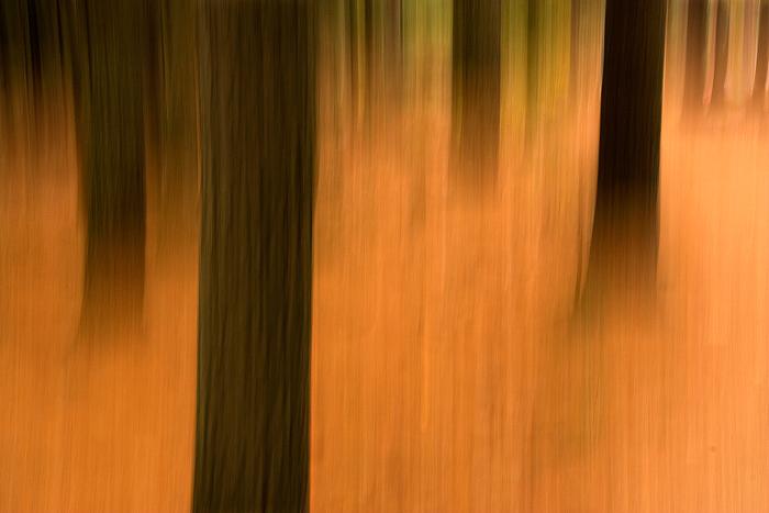 bgr_forest3
