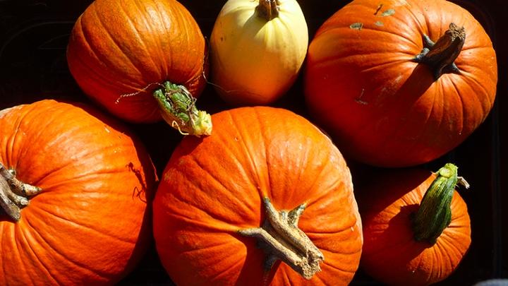 pumpkins09-3