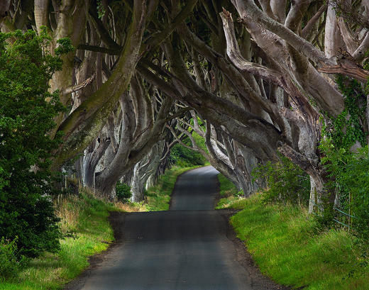 dark_hedges(l)