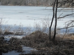 3-18-12 Fields Pond (9)