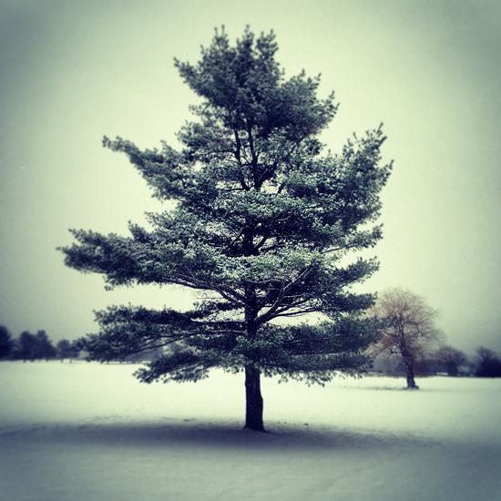 1-6-13 tree