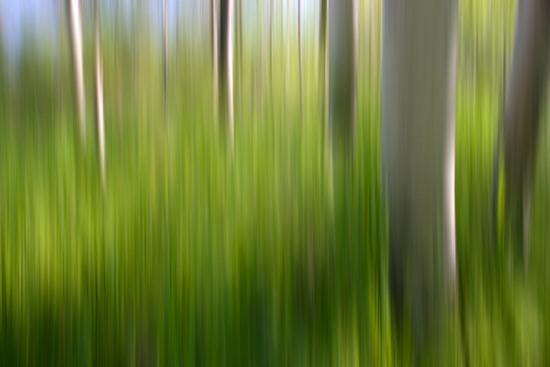 4-12-13 acadia birches