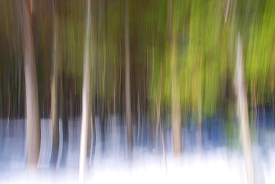 4-12-13 bangor forest 1