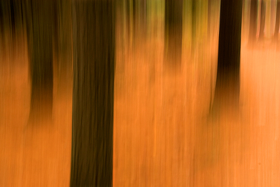 4-12-13 bangor forest fire