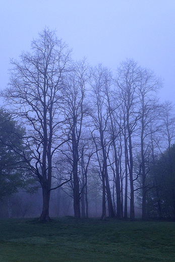 5-11-13 foggy trees
