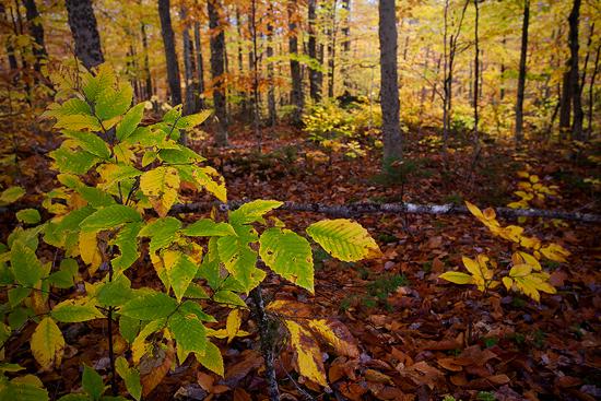 10-17-13 Foliage2