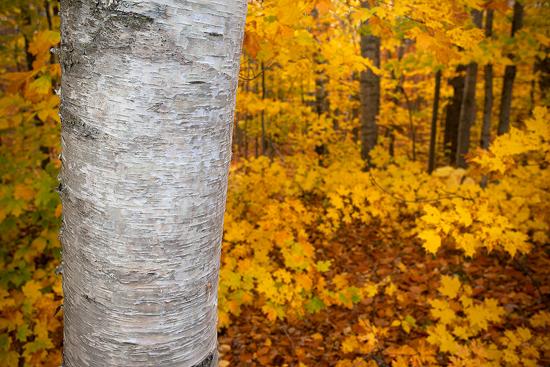 10-17-13 Foliage5