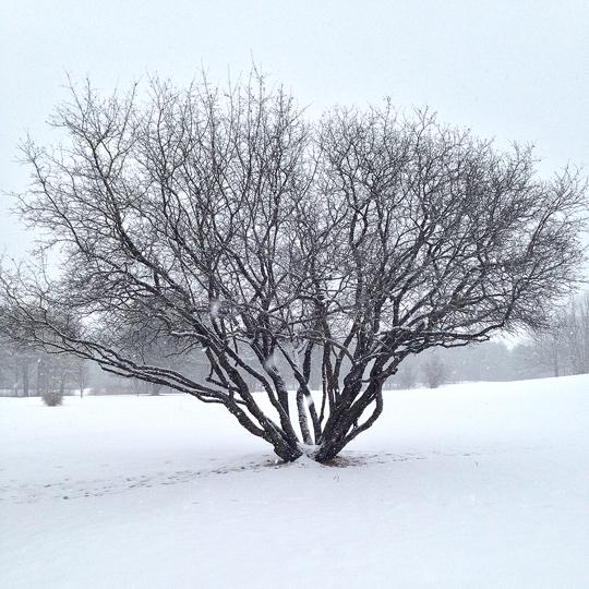 2-13-14 tree2